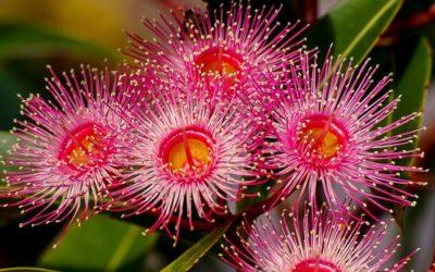 Estudar Ciências Ambientais e Gestão na Austrália
